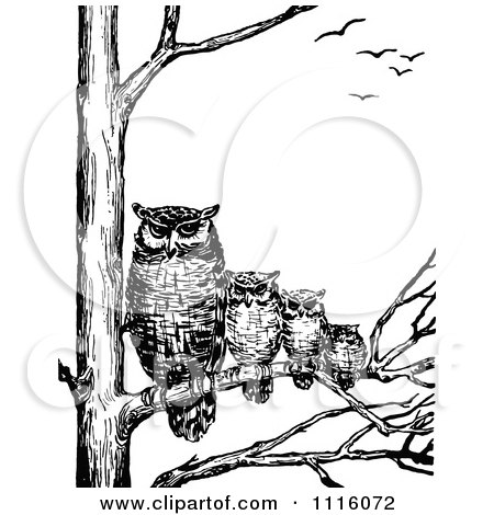 Clipart Retro Vintage Black And White Family Of Owls In A Tree Royalty Free Vector Illustration
