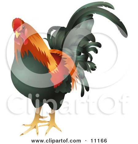 Black, Red and Orange Cock, Chicken, Rooster Bird Clipart Illustration by AtStockIllustration