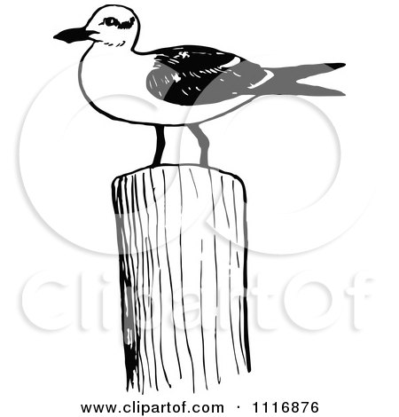 Clipart Of A Retro Vintage Black And White Seagull On A