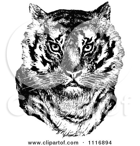 Clipart Of A Retro Vintage Black And White Tiger Face - Royalty Free Vector Illustration by Prawny Vintage