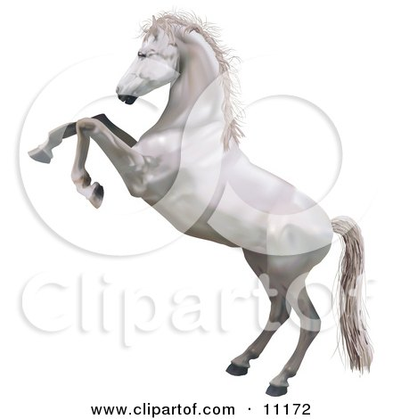 a White Horse Standing on its Hind Legs While Rearing up in Defense Clipart Illustration by AtStockIllustration