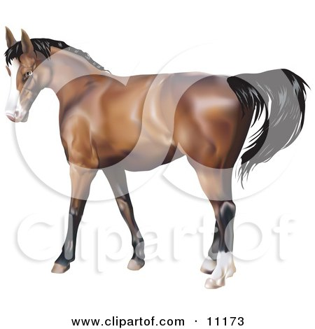 Brown Horse With a Black Mane Clipart Illustration by AtStockIllustration