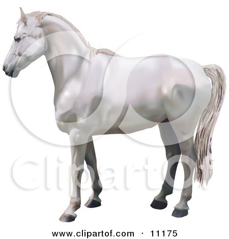 a Beautiful White Horse in Profile Posters, Art Prints