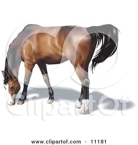 Brown Horse With a Black Mane Grazing Posters, Art Prints