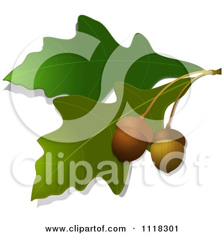 Clipart Of A Black And White Oak Branch With Leaves And