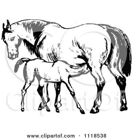 Clipart Of A Retro Vintage Black And White Mare Horse And Colt - Royalty Free Vector Illustration by Prawny Vintage