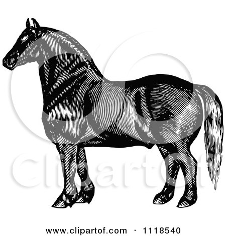 Clipart Of A Retro Vintage Black And White Horse 3 - Royalty Free Vector Illustration by Prawny Vintage