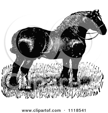 Clipart Of A Retro Vintage Black And White Horse 4 - Royalty Free Vector Illustration by Prawny Vintage