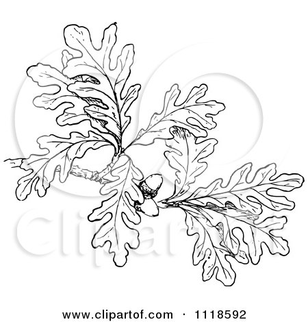 Clipart Of A Retro Vintage Black And White Oak Branch With Leaves And Acorns - Royalty Free Vector Illustration by Prawny Vintage