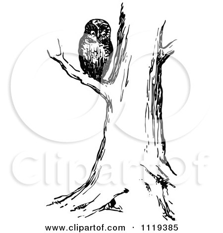 Clipart Of A Retro Vintage Black And White Owl In A Tree - Royalty Free Vector Illustration by Prawny Vintage