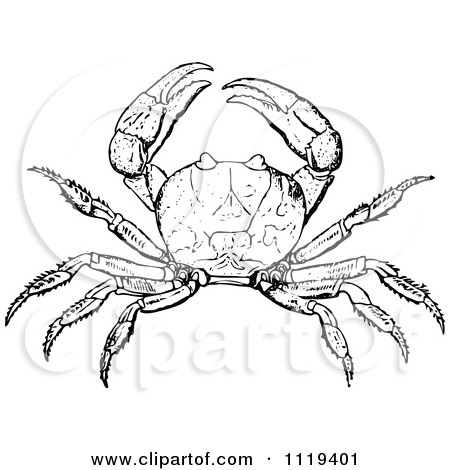 Royalty-Free (RF) Crab Clipart, Illustrations, Vector ... Blue Crab Clipart Black And White