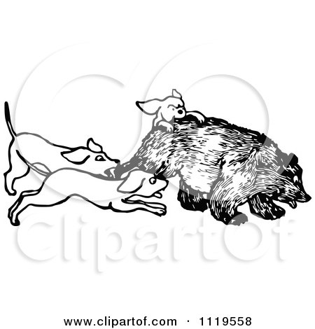 Clipart Of A Retro Vintage Black And White Hunting Dogs Attacking A Bear - Royalty Free Vector Illustration by Prawny Vintage