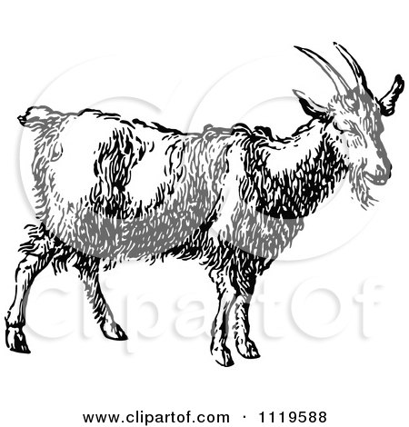 Clipart Of A Retro Vintage Black And White Goat - Royalty Free Vector Illustration by Prawny Vintage