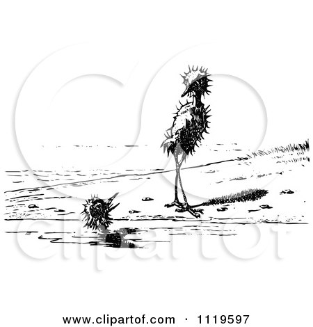 Clipart Of A Retro Vintage Black And White Ugly Birds On A Beach 3