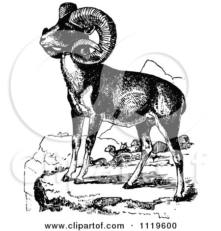 Clipart Of Retro Vintage Black And White Wild Goats - Royalty Free Vector Illustration by Prawny Vintage