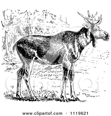 Clipart Of A Retro Vintage Black And White Wild Elk - Royalty Free Vector Illustration by Prawny Vintage