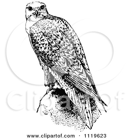 clipart of a retro vintage black and white falcon bird