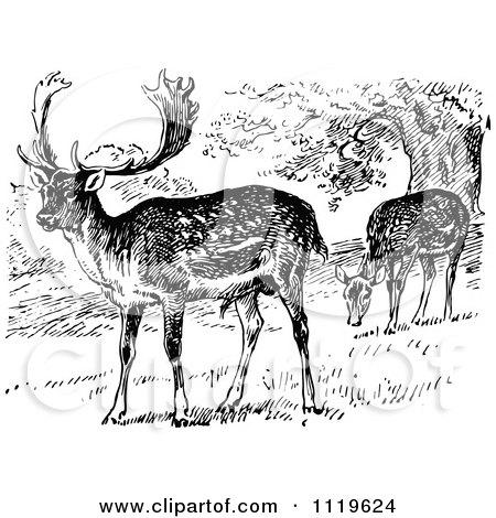 Deer illustration black and white - photo#50