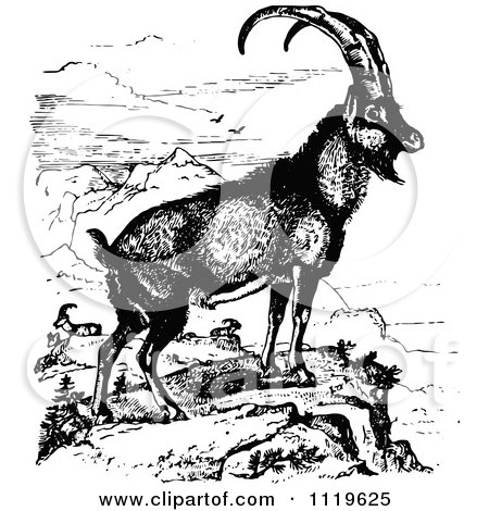 Clipart Of A Retro Vintage Black And White Ibex Wild Goat - Royalty Free Vector Illustration by Prawny Vintage