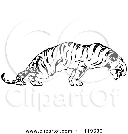 Clipart Of A Retro Vintage Black And White Tiger - Royalty Free Vector Illustration by Prawny Vintage