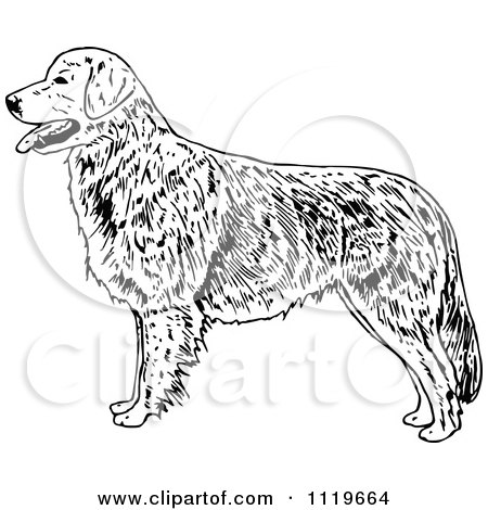 Clipart Of A Retro Vintage Black And White Golden Retriever Dog - Royalty Free Vector Illustration by Prawny Vintage