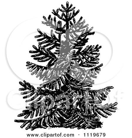 Clipart Of A Retro Vintage Black And White Chile Pine Monkey Puzzle Tree - Royalty Free Vector Illustration by Prawny Vintage