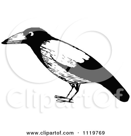 Clipart Of A Retro Vintage Black And White Black Bird - Royalty Free Vector Illustration by Prawny Vintage