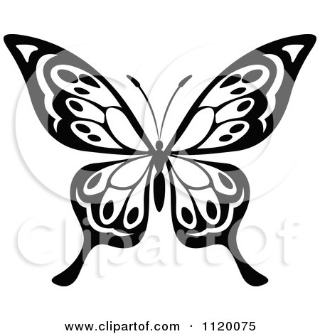 Clipart Of A Black And White Butterfly 16