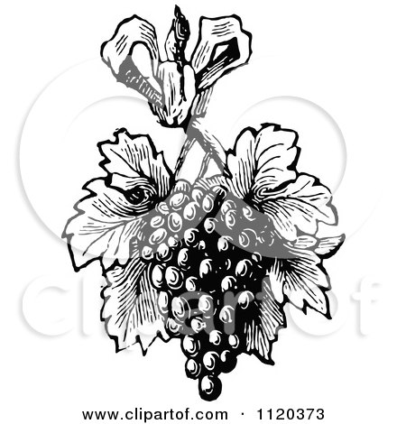 Clipart Of A Retro Vintage Black And White Bunch Of Grapes With Leaves - Royalty Free Vector Illustration by Prawny Vintage