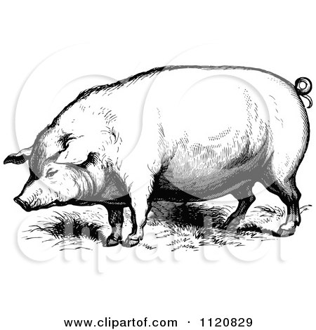 Royalty Free Hog Illustrations by Prawny Vintage Page 1