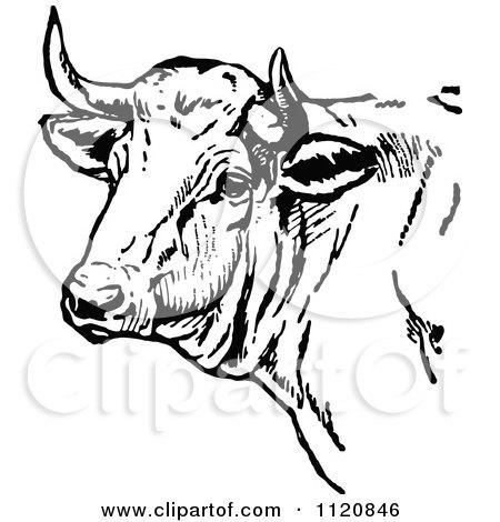 Black cow head clipart - photo#26