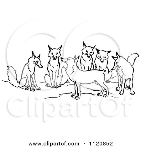 Clipart Of A Retro Vintage Black And White Tailless Fox And Group - Royalty Free Vector Illustration by Prawny Vintage