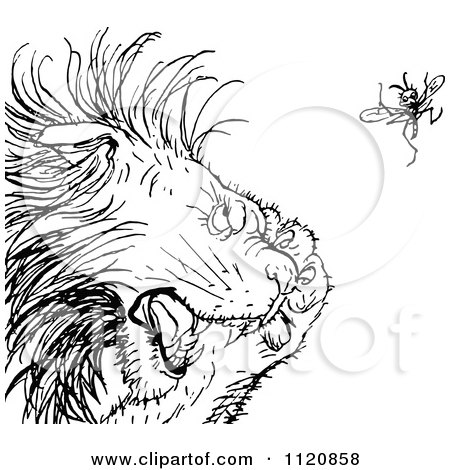 Clipart Of A Retro Vintage Black And White Gnat Annoying A Lion - Royalty Free Vector Illustration by Prawny Vintage
