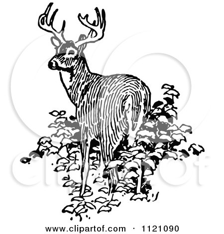 Clipart Of A Retro Vintage Black And White Deer In Bushes - Royalty Free Vector Illustration by Prawny Vintage