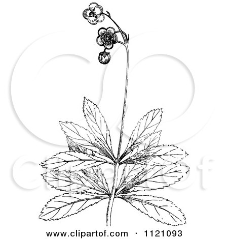 Clipart Of A Retro Vintage Black And White Botanical Plant With Flowers 2 - Royalty Free Vector Illustration by Prawny Vintage