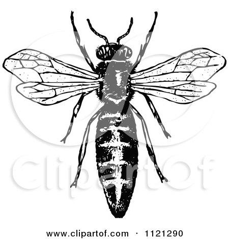 Queen Honey Bee Drawing