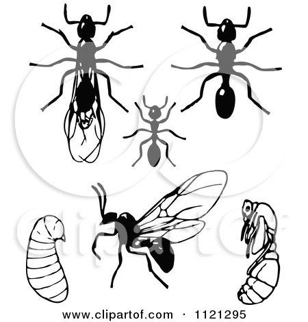 royaltyfree rf ant clipart illustrations vector