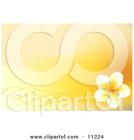 yellow frangipani plumeria flower with designs on a yellow background.