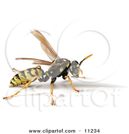 Yellow Jacket Bee Wasp With a Shadow Clipart Illustration by Leo Blanchette