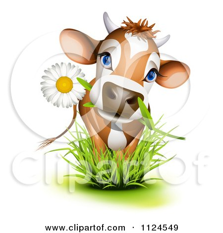 Clipart Of A Cute Jersey Cow With A Daisy In Its Mouth Standing In Grass - Royalty Free Vector Illustration by Oligo