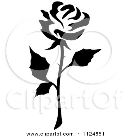 White Flower Picture on Clipart Of A Black And White Rose Flower 13   Royalty Free Vector
