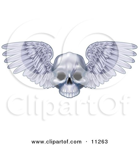 Human Skull With Feathered Wings Spanning Posters, Art Prints