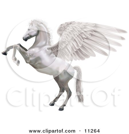 a White Winged Horse, Pegasus, Rearing up on its Hind Legs Clipart Illustration by AtStockIllustration