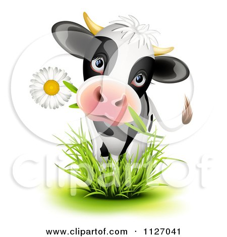 Cartoon Of A Cute Holstein Cow Eating A Daisy Flower And Standing In Grass - Royalty Free Vector Clipart by Oligo