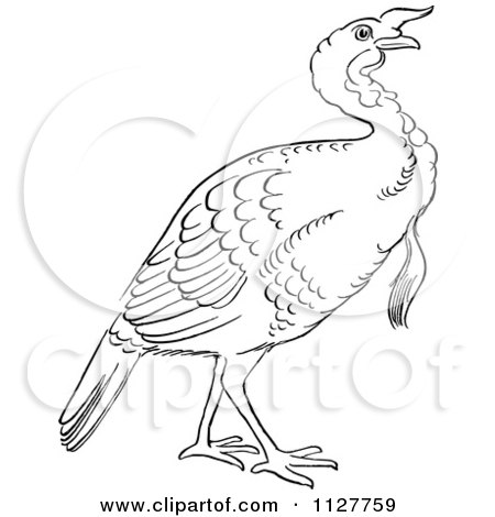 Cartoon Of A Retro Vintage Black And White Gobbler Thanksgiving Turkey Bird Line Drawing