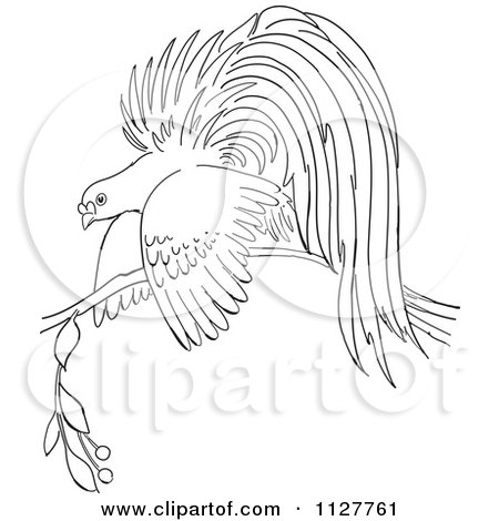 Cartoon Of A Retro Vintage Black And White Bird Of Paradise On A Branch Line Drawing Royalty Free Vector Clipart