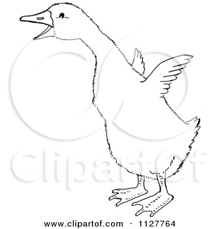 Cartoon Of A Retro Vintage Black And White Gosling Flapping Its Wings Line Drawing Royalty Free Vector Clipart