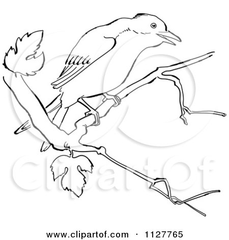 Cartoon Of A Retro Vintage Black And White Mockingbird In A Tree Line Drawing - Royalty Free Vector Clipart by Picsburg