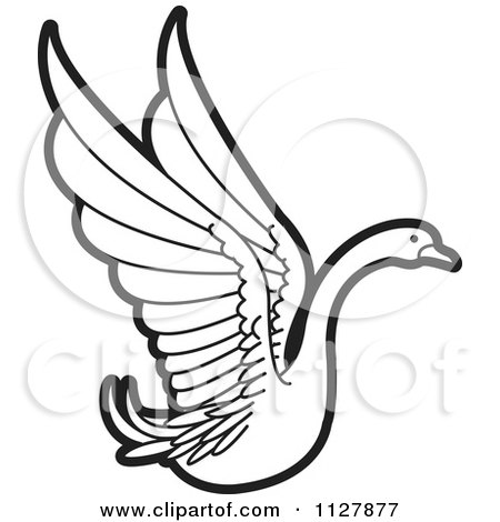 Aninimal Book: Clipart Of A Black And White Swan Flying 2 - Royalty Free ...