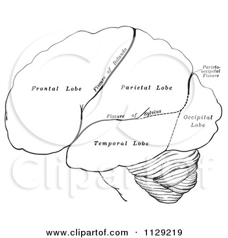 Cartoon Of A Black And White Retro Diagram Of The Hemispheres Of The Human Brain - Vector Clipart by Picsburg